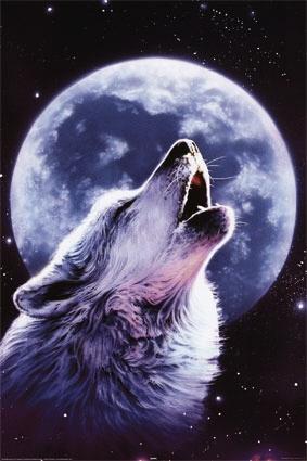 Волки какие они что они чувствуют